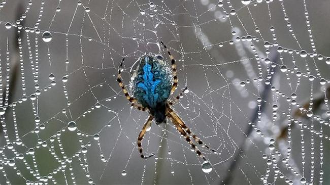 hvor lever edderkopper